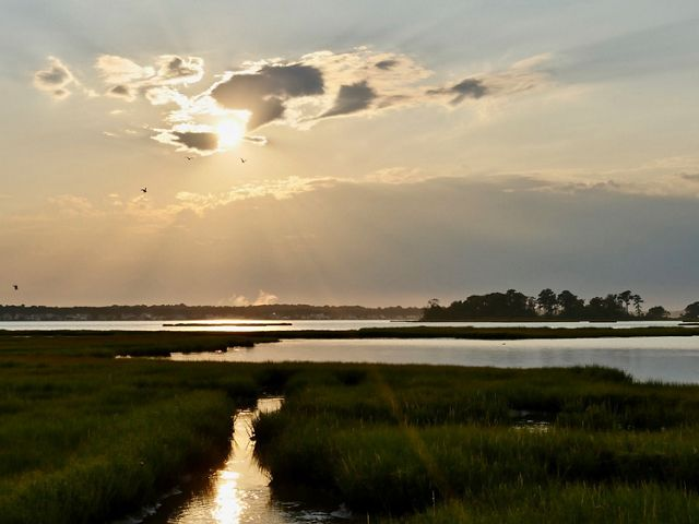 Fingers of open water cut through low green marshes. A line of trees stand out against the horizon. The setting sun is partially obscured by passing clouds.