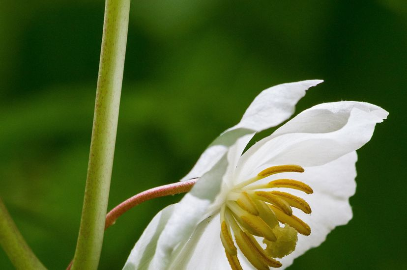 A delicate white flower with five petals that gentle curve inward towards a yellow center.