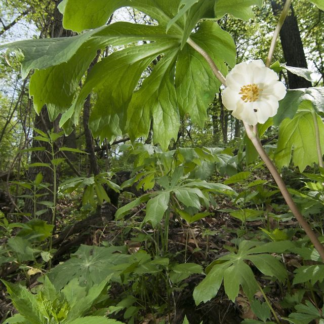 Small white flower dots a forested landscape