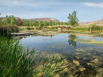 McCarran Ranch Preserve on the Truckee River