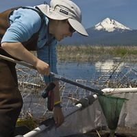 Volunteer at Williamson River Delta near Klamath Falls