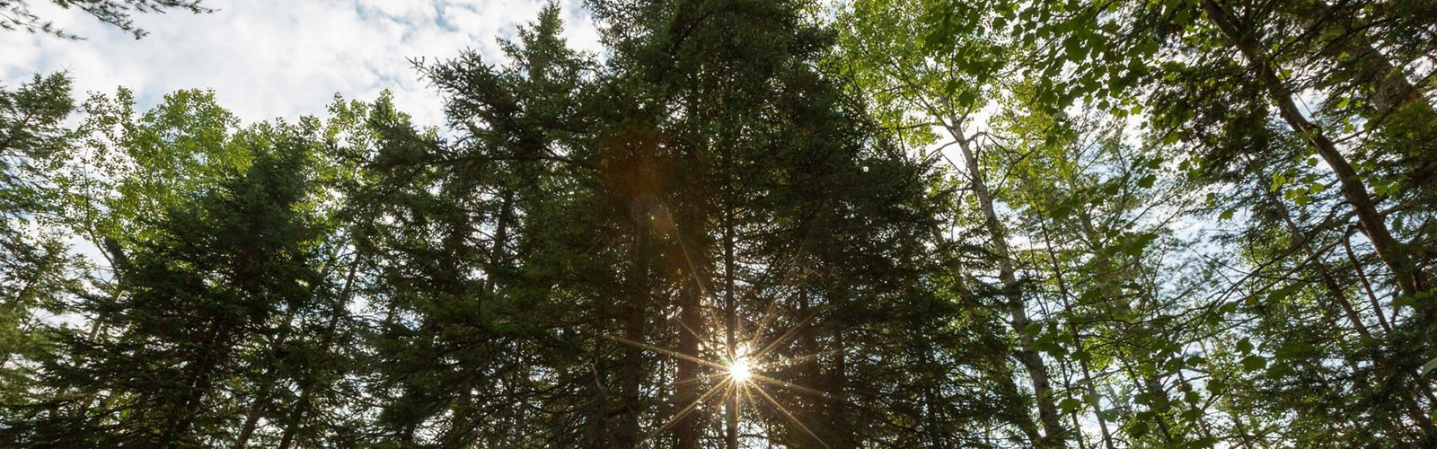 Sun streaming through trees at McMahon Lake preserve