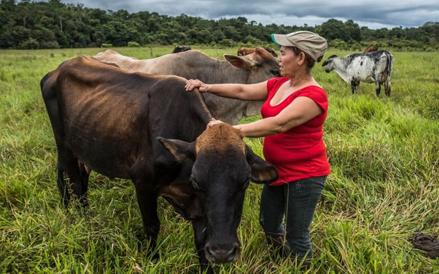 Mercedes Murillo attends to her cows on her farm, San Martin, Meta, Colombia where 16 acres of her land are designated for pastures.