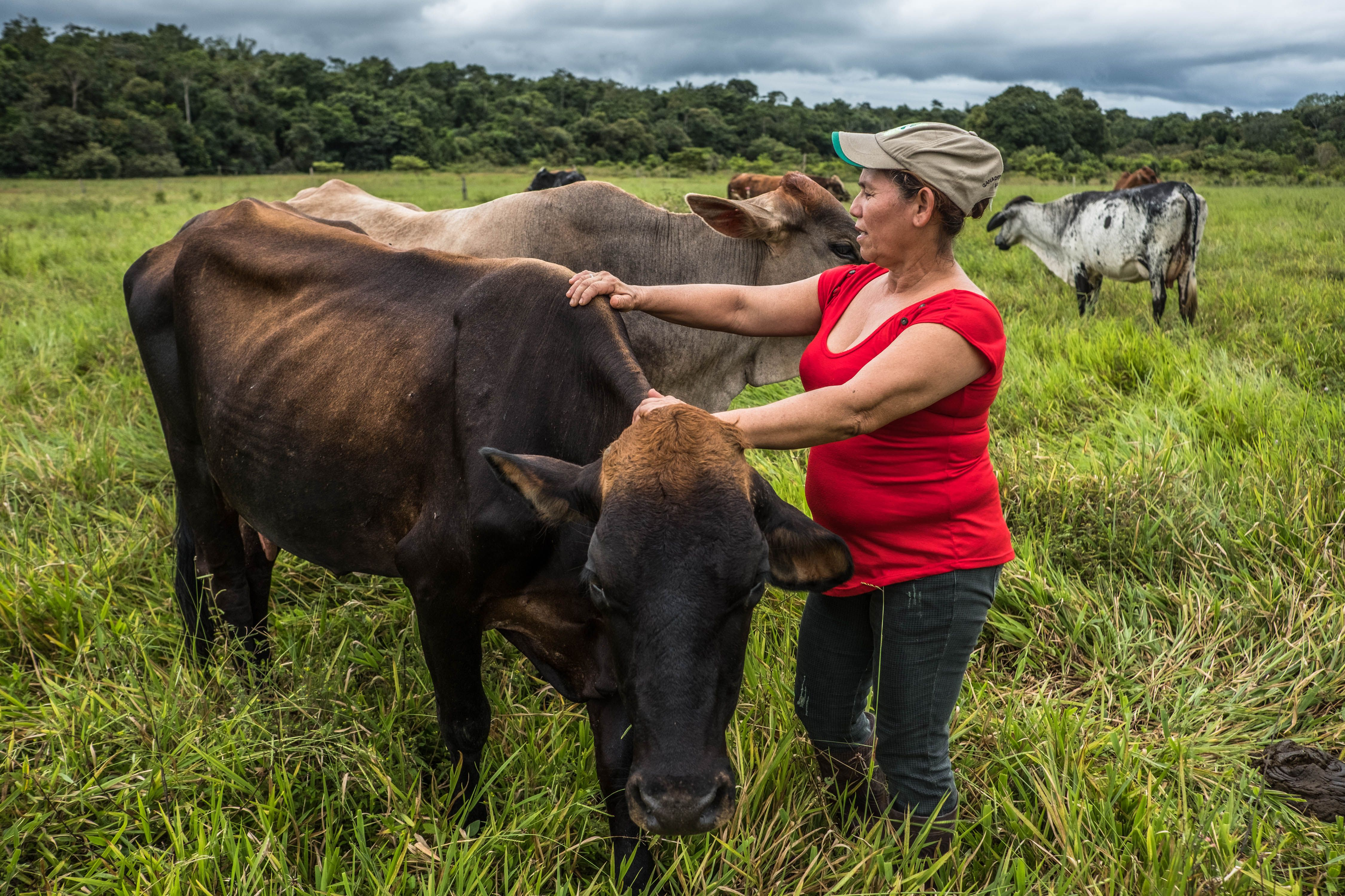 a woman in a red shirt stands with her cows in a field