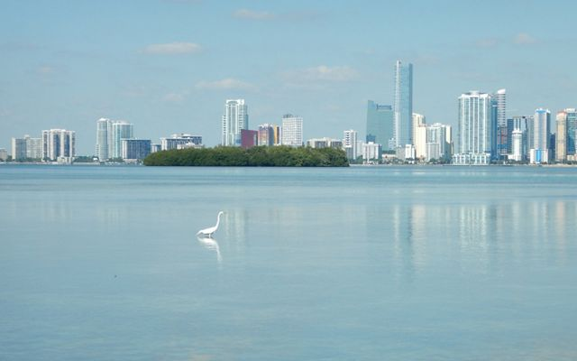 Biscayne Bay in Miami, Florida with a wading bird and city skyline.