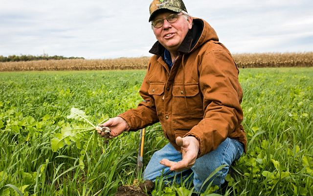 Radishes are part of the cover crop mix on Mike's Indiana farm.