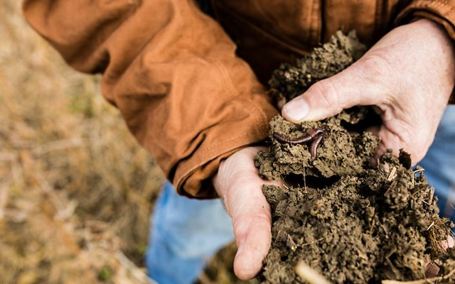 Fifth generation Mike Werling delights in watching earthworms forage at night on his farm and says he typically finds half a dozen in a shovel scoop.