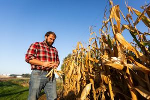 Mike Milligan looking at a row of corn crops