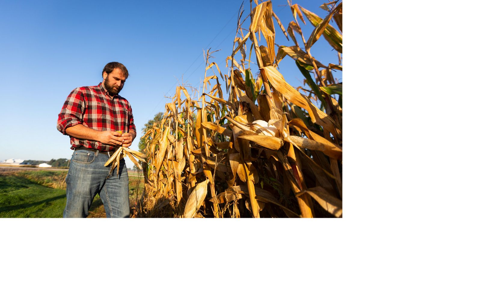 Mike looks at his corn crop on his farm in the Saginaw Bay Watershed in Michigan.