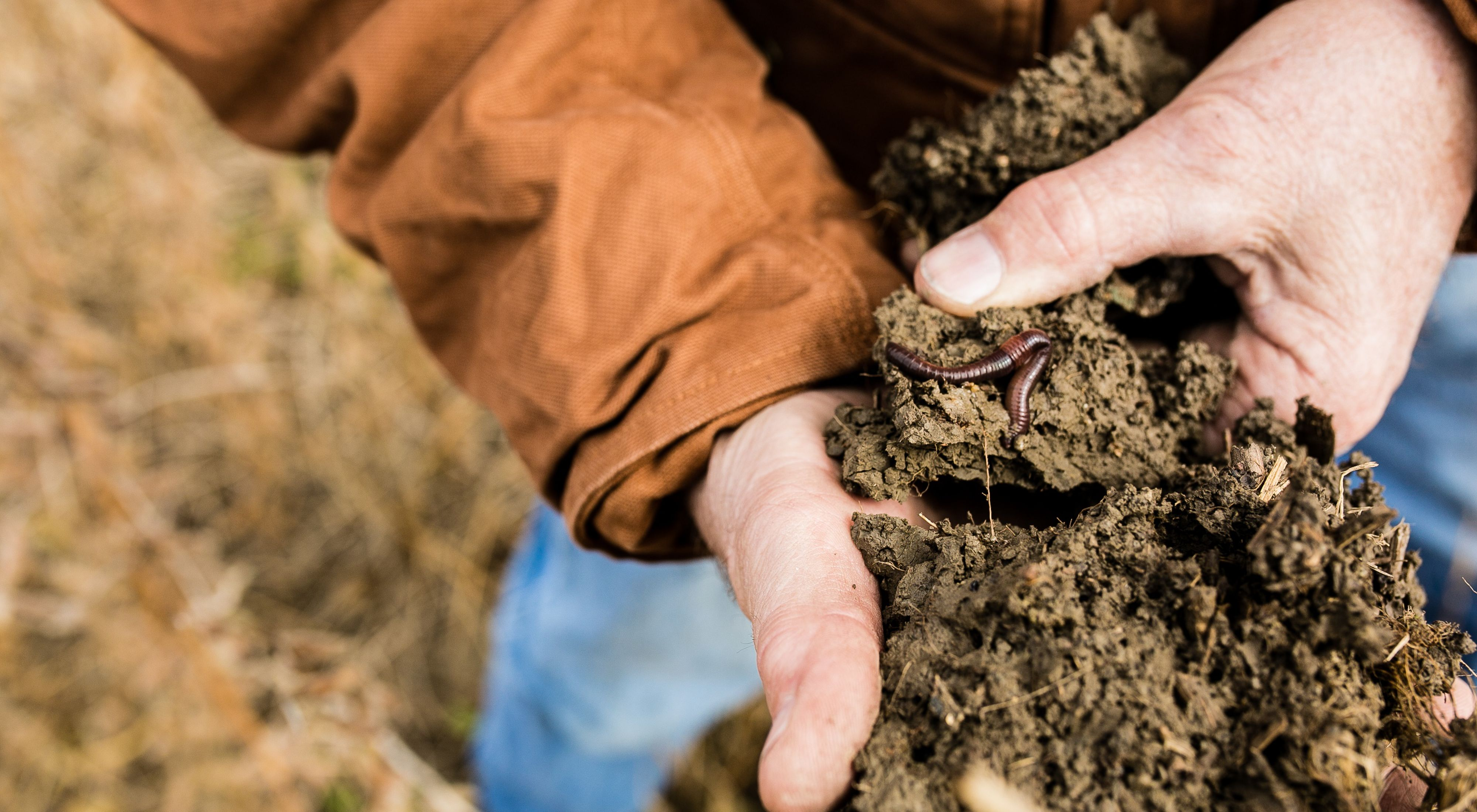 Man holding soil with a worm visible in it.
