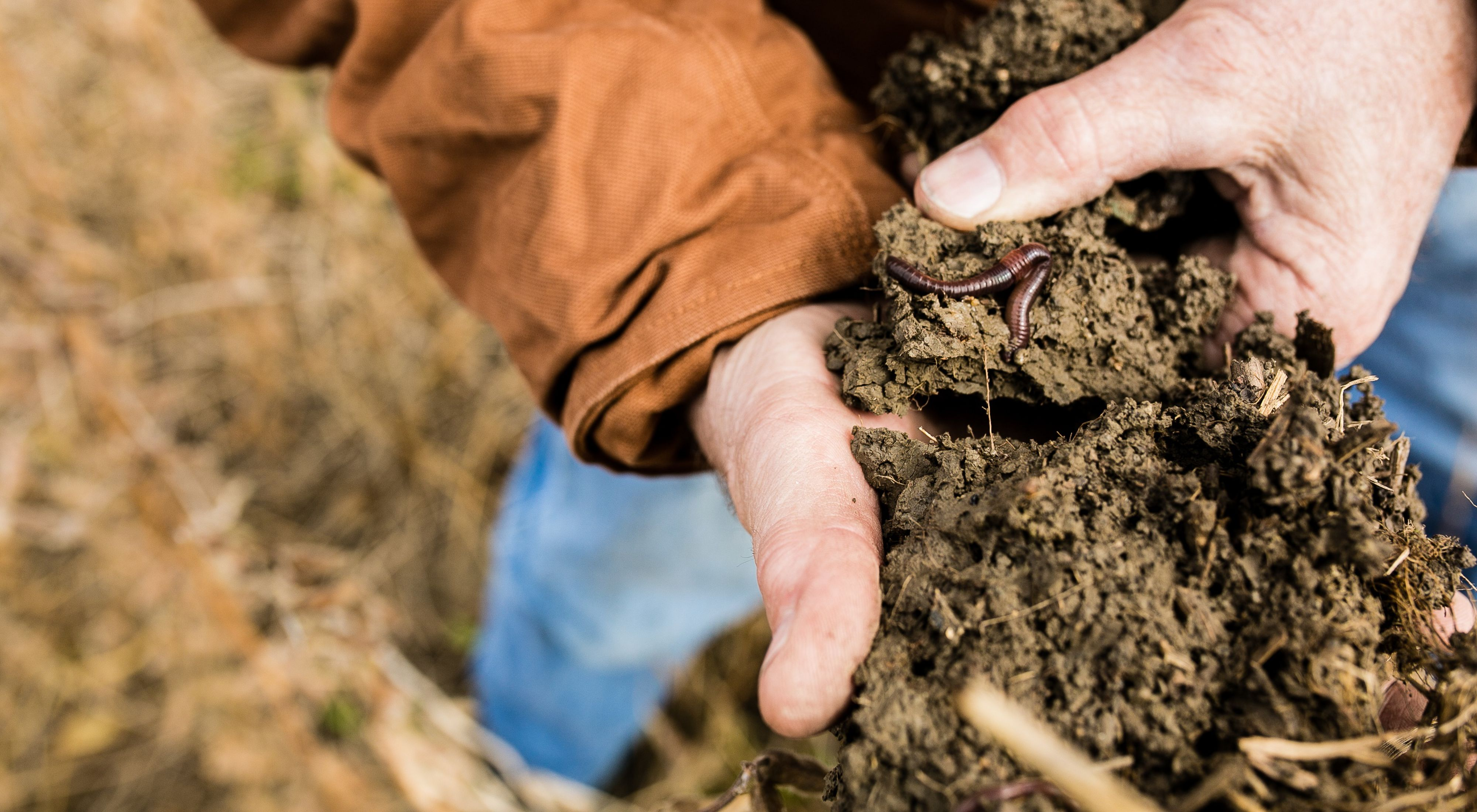 Soil is one of the most biologically diverse ecosystems on Earth.