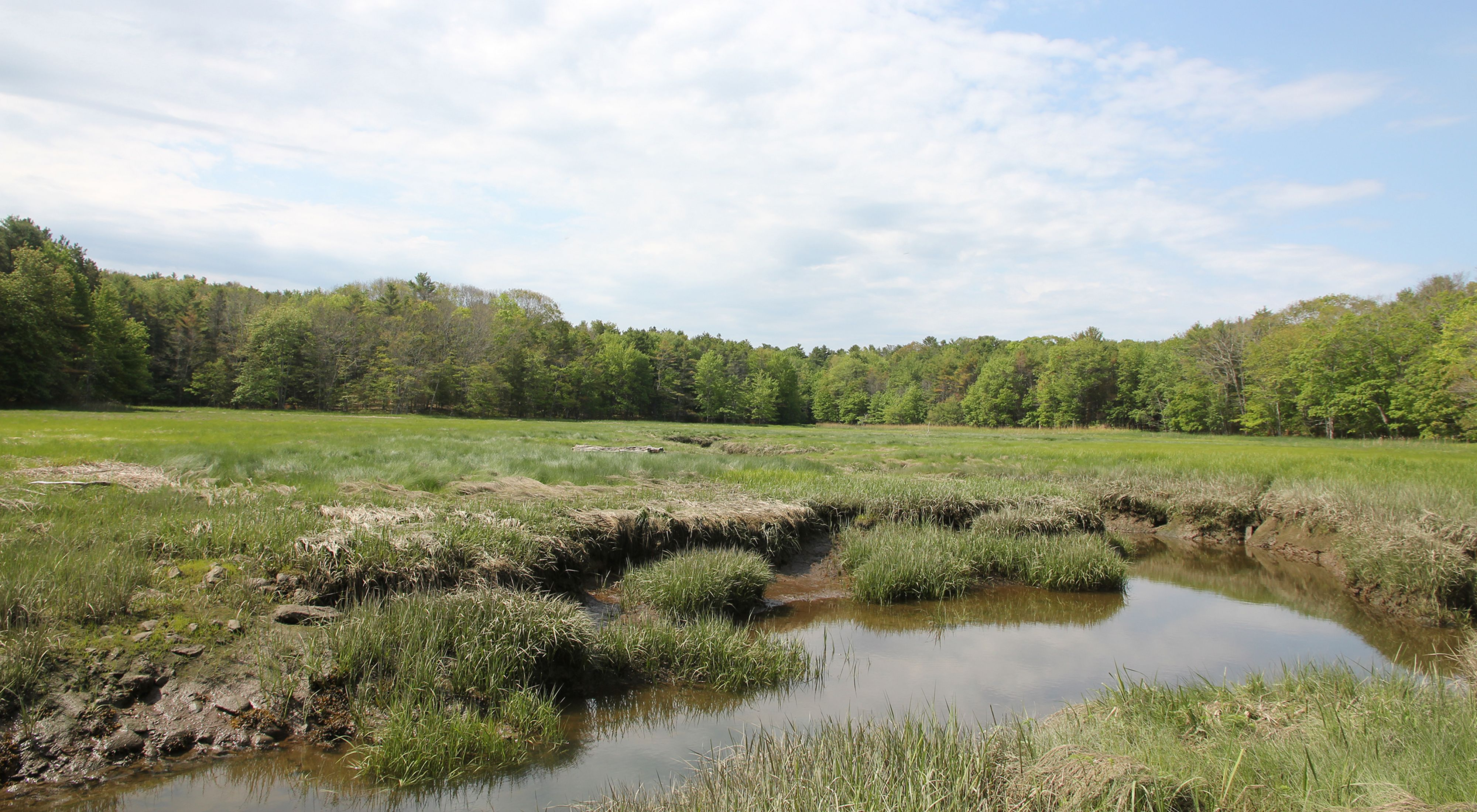 A salt marsh with clumped mud and grass and tidal ponds.
