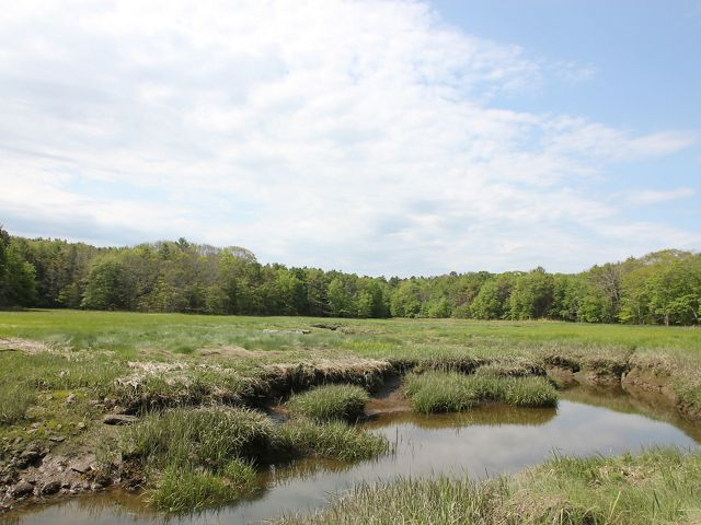 Looking out across green grasses in a tidal marsh with trees beyond.