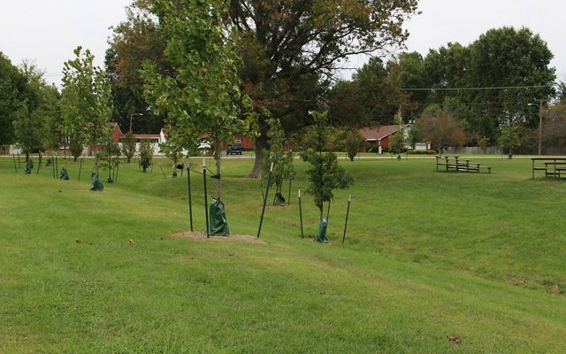 New trees have been planted in the Mill Creek watershed.