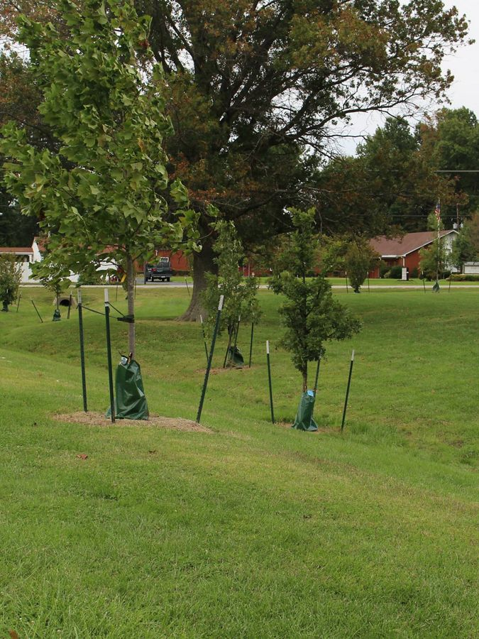 Series of trees recently planted with support poles.