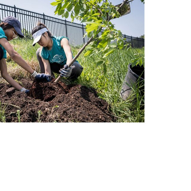 partners planting conifer trees
