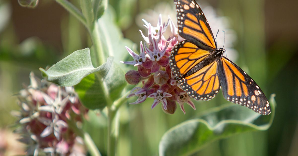 River Fork Ranch Monarch 200 by 150