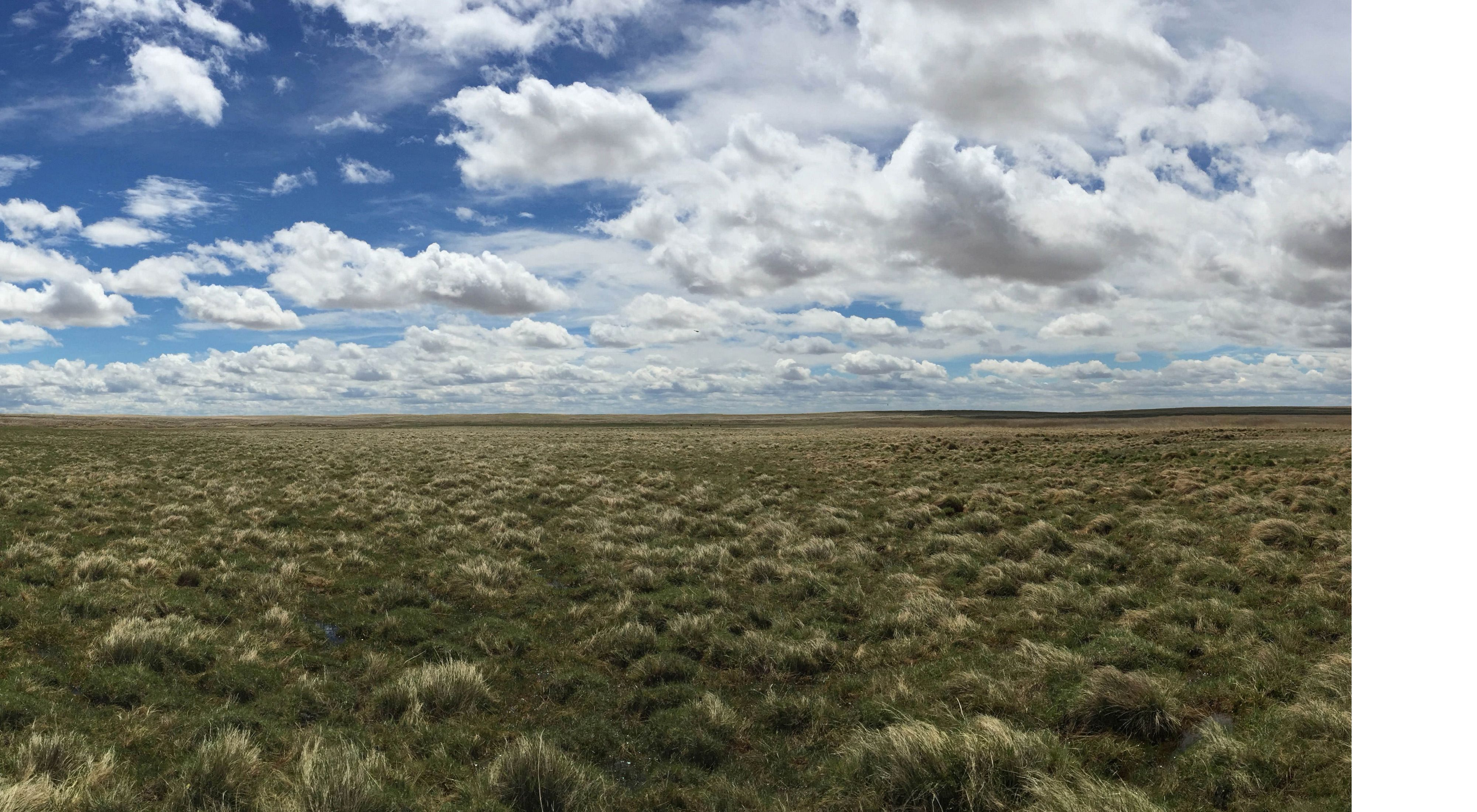 the world's largest intact temperate grassland.
