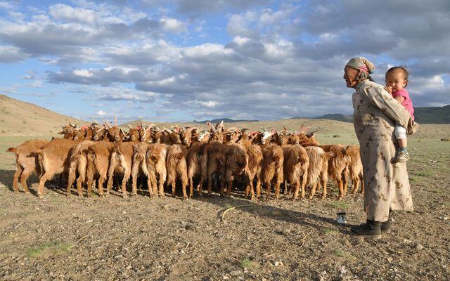 Mongolia Herder