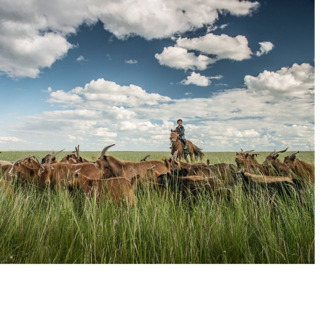 on horseback minds his family's herd of goats in the grassland steppe of eastern Mongolia's Toson Hulstai Nature Reserve.