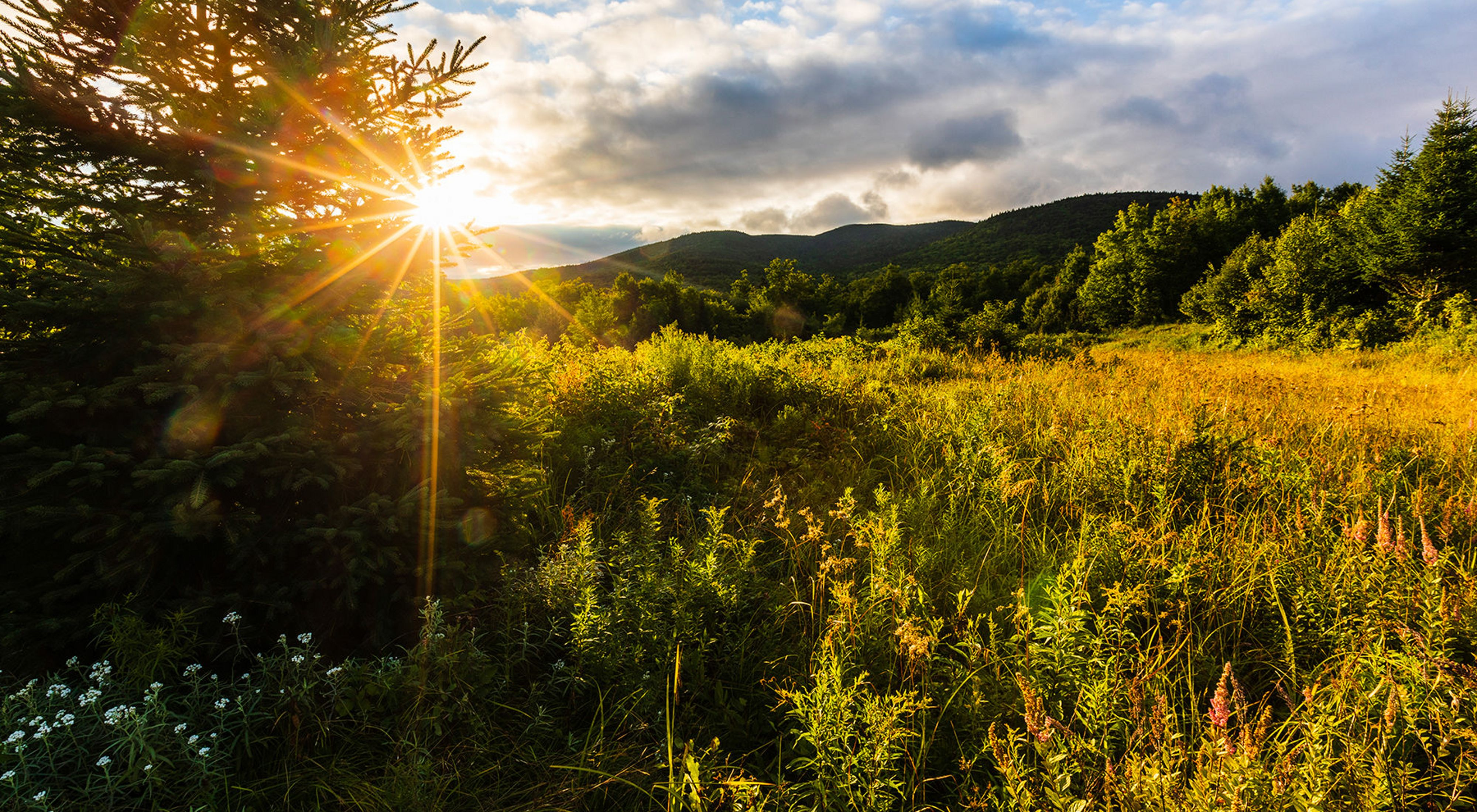The sun rising over mountains lights a field to a golden color.