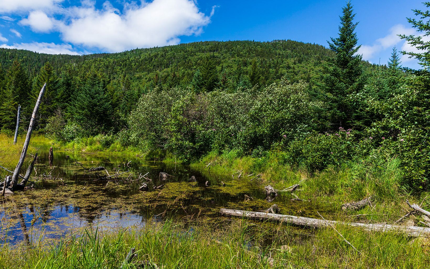 A quiet beaver pond with dead tree snags sits below a forested mountain.
