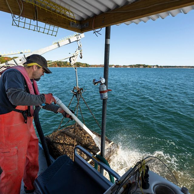 Steve Weglarz of Cedar Point Oyster Farm hoses off a cage full of oysters on his oyster farm in Little Bay in Durham, New Hampshire.