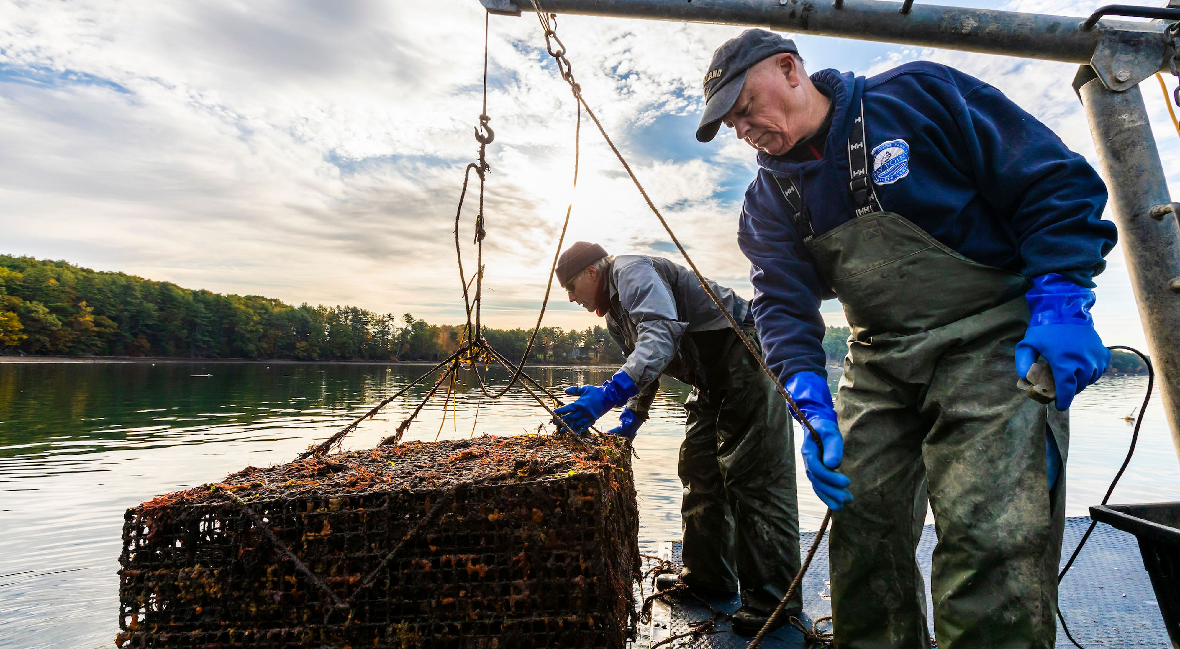 Two men on a boat haul up a rectangular oyster cage