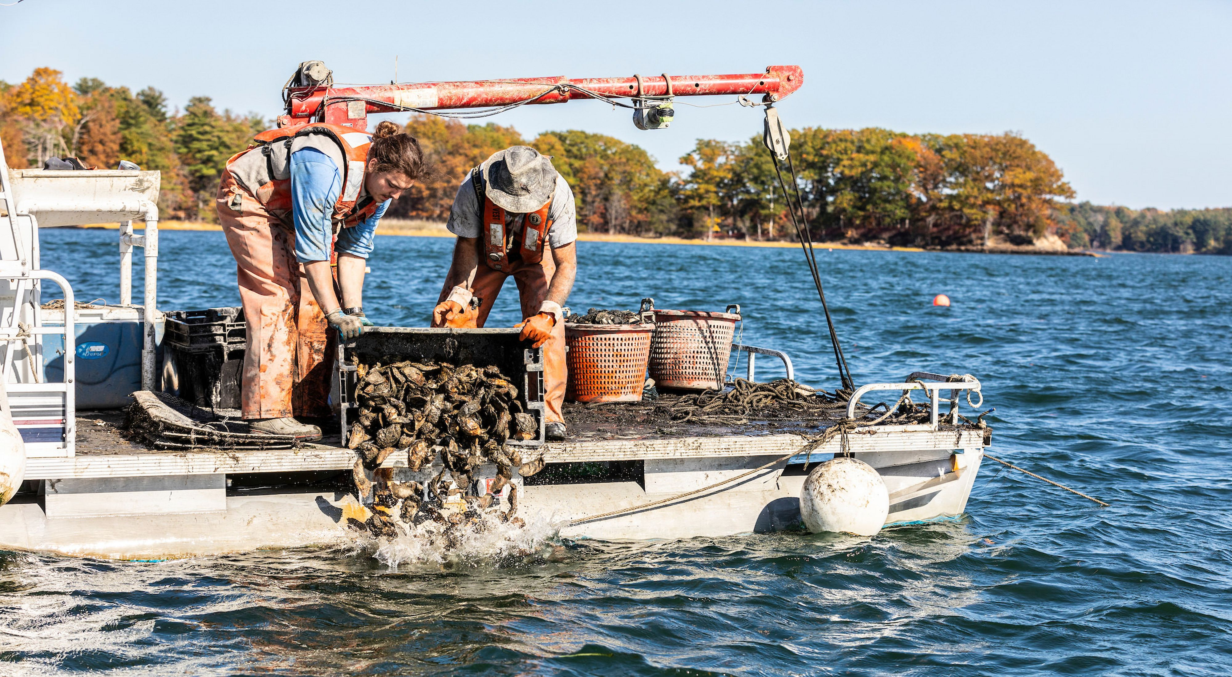 Brian Gennaco (right) of the Virgin Oyster Company and an employee add oysters to a restoration reef as part of the Supporting Oyster Aquaculture and Restoration (SOAR) program. Great Bay in Durham, New Hampshire.