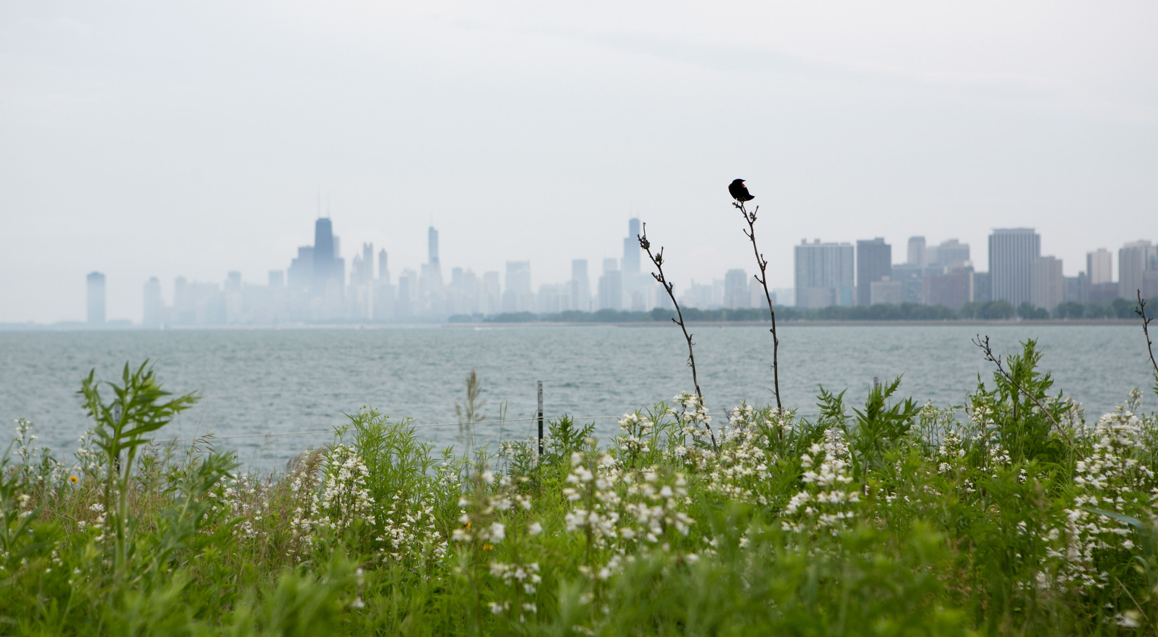 at the Montrose Harbor bird sanctuary during a stewardship day on Saturday, June 22, 2013.