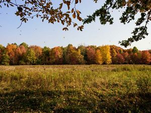 A field ringed in trees showing fall foliage at Morgan Swamp Preserve.