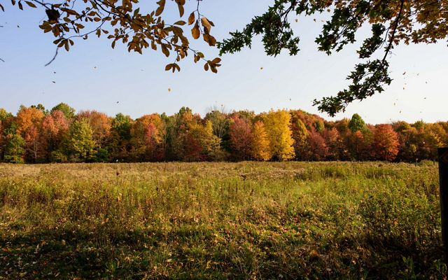 Animated leaves blowing in the breeze above a wildflower-filled field lined by a stand of trees, colored with fall foliage.