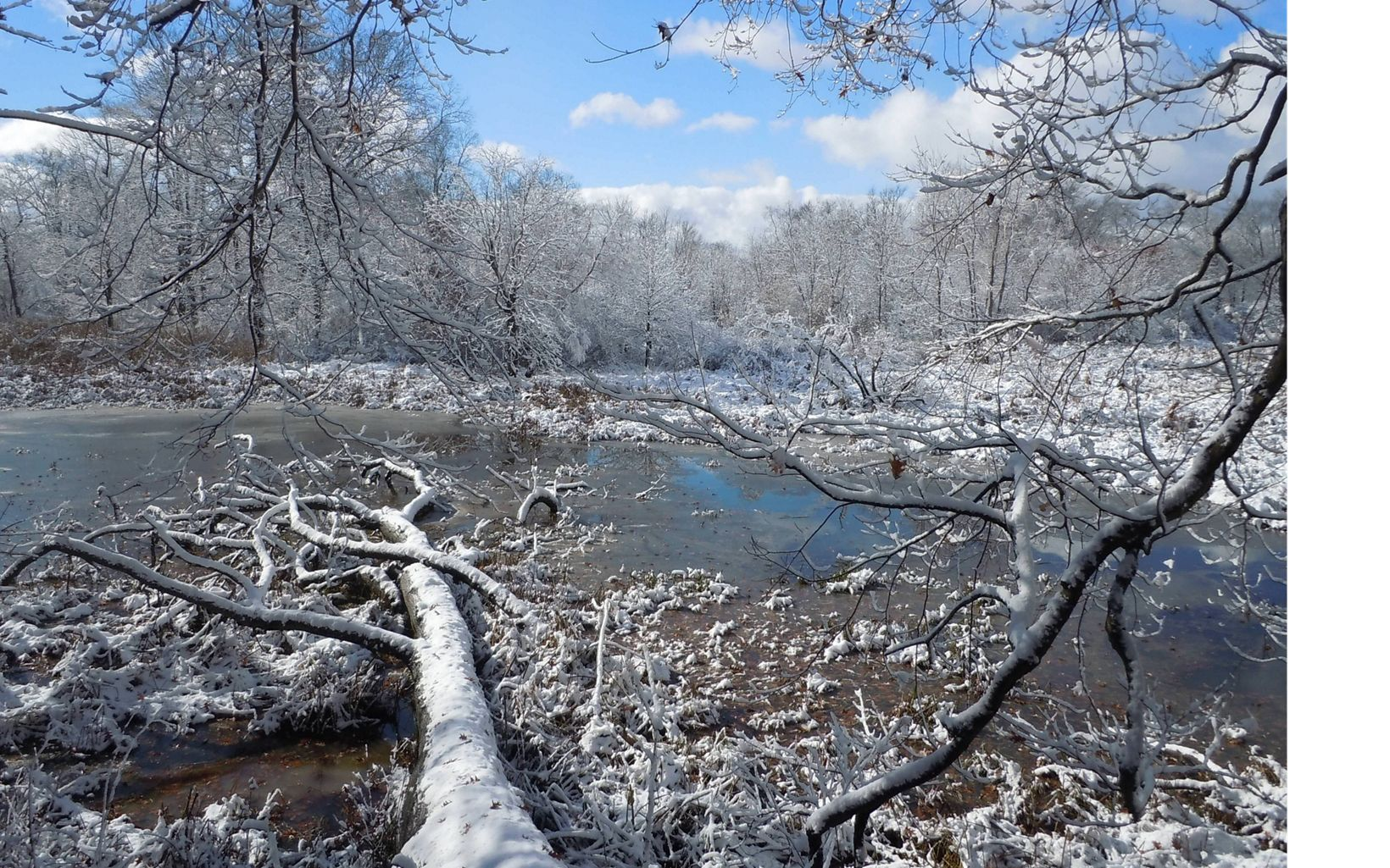 Lake effect snow off of Lake Erie helps promote the growth of Morgan swamp's hemlock trees, which in Ohio, are not typically found in swamps.