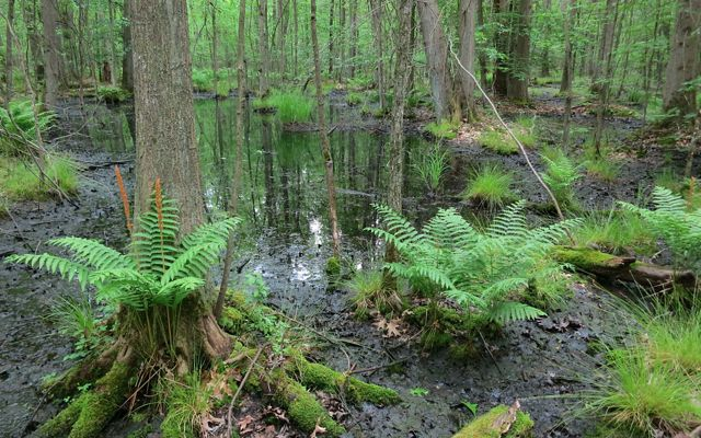 Trees grow up out of a pool of water with clumps of green ferns and grasses dotting the landscape.