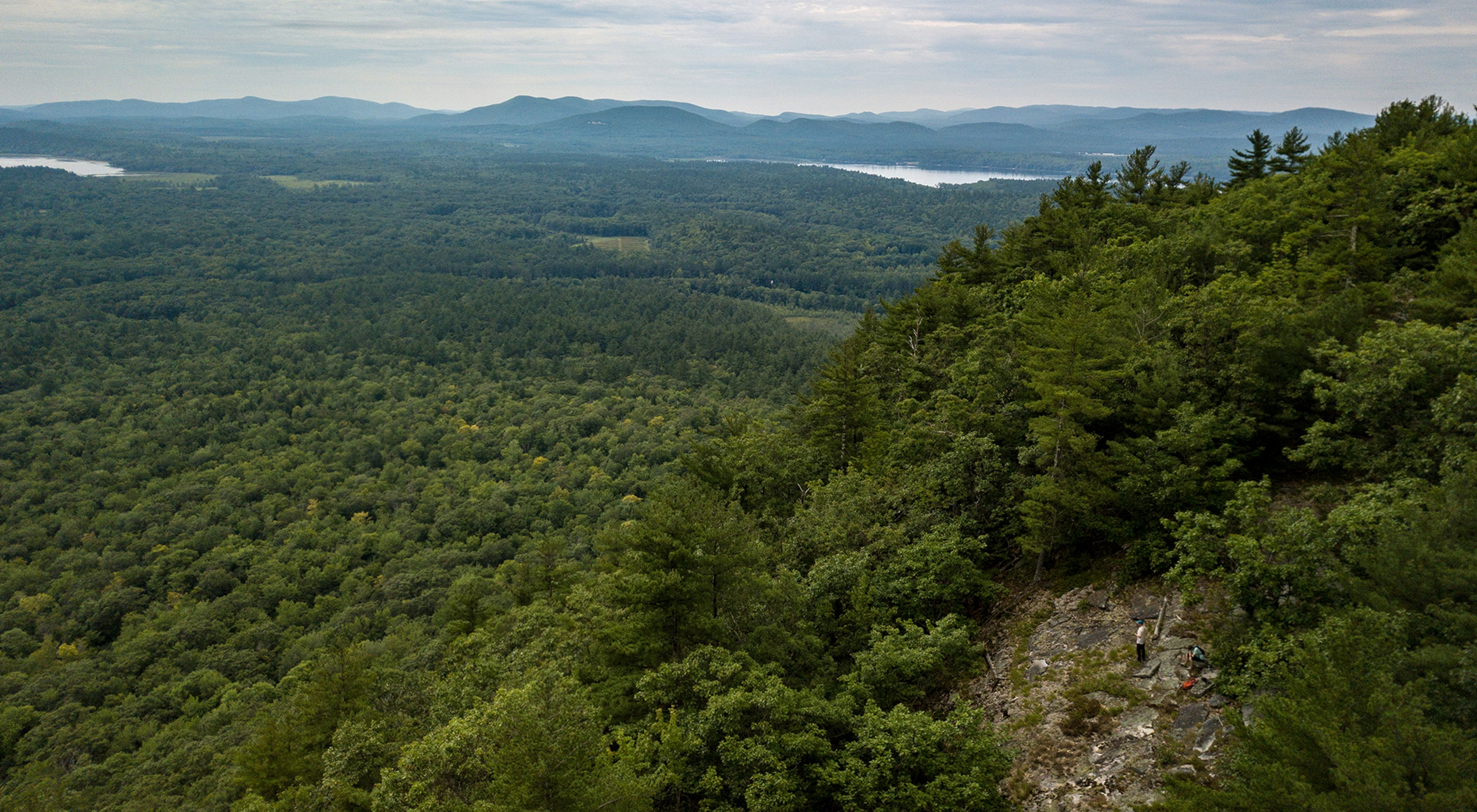 A view of a forested flood plain with lakes and distant mountains.