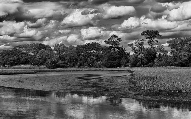 Thick white clouds hang low over a stand of trees along the edge of an open wetland.
