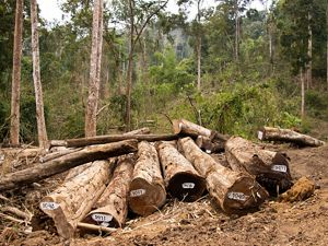 of Myanmar's citizens live in rural areas and are dependent on forests for their basic needs.