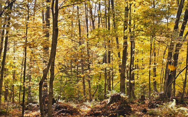 Forest/Climate Solutions