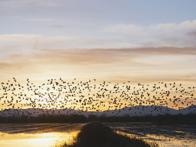 a flock of birds flies over flooded rice fields at sunrise