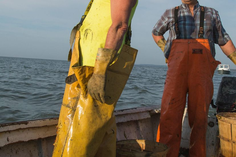 Two watermen at work on a skiff. Only the lower half of the men are visible. They're wearing yellow and orange waders. Empty bushel baskets are at their feet.
