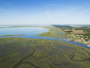 Aerial view of Chesapeake Bay wetlands