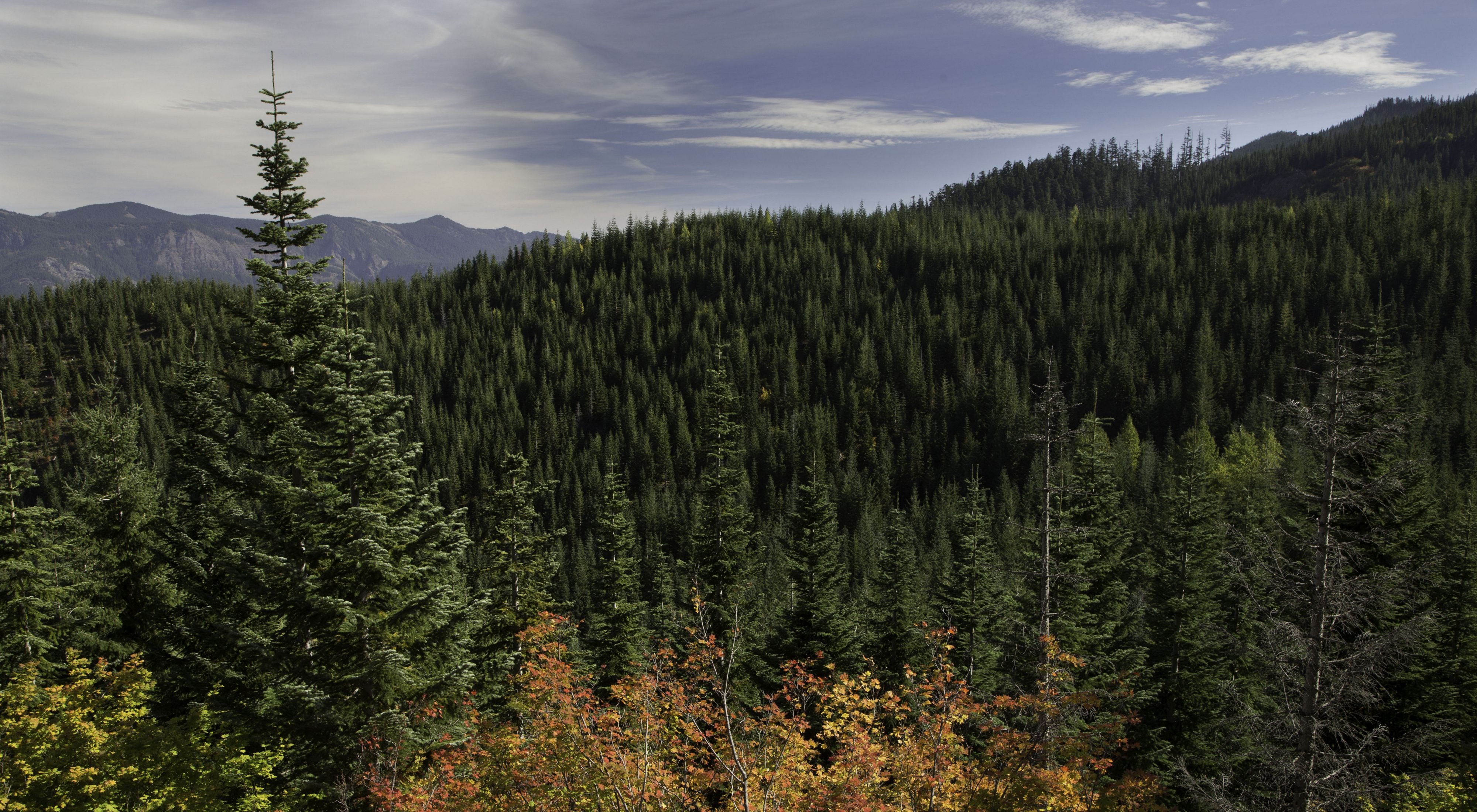 Photo of mountainous forests in Montana.