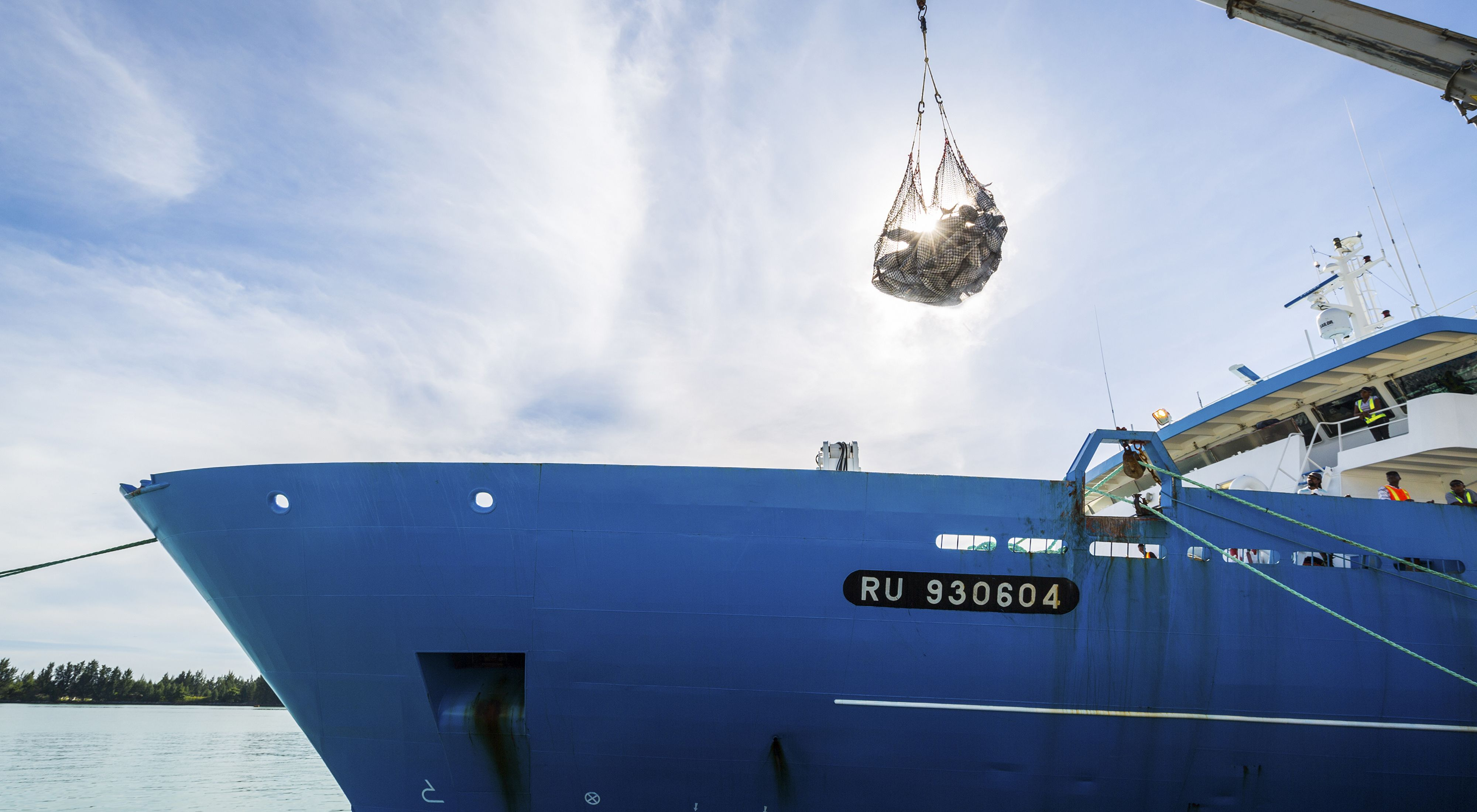the sun shines through a net of frozen tuna as its lifted off a large, blue fishing vessel