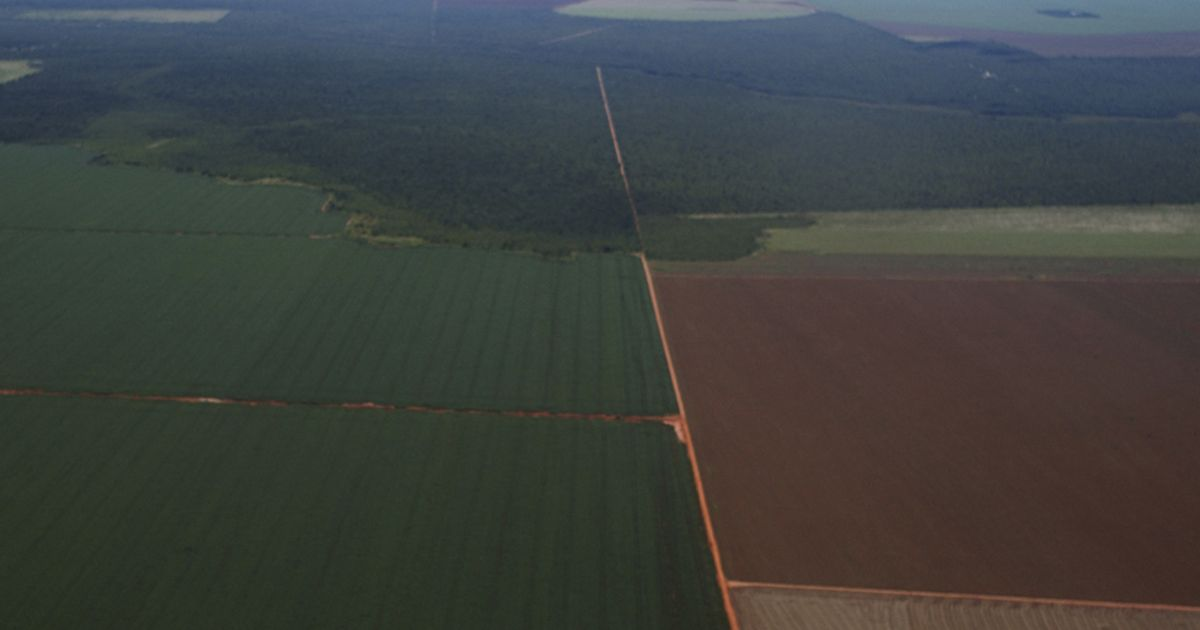 A patch of native Cerrado grassland surrounded by agricultural fields.