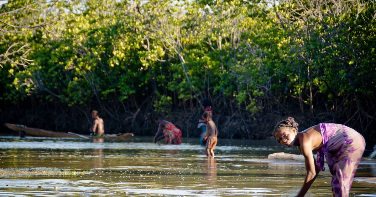 Mangrove fisheries involve and support entire communities in many coastal villages in Madagascar.