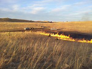 Fire personnel using drip torches in tallgrass