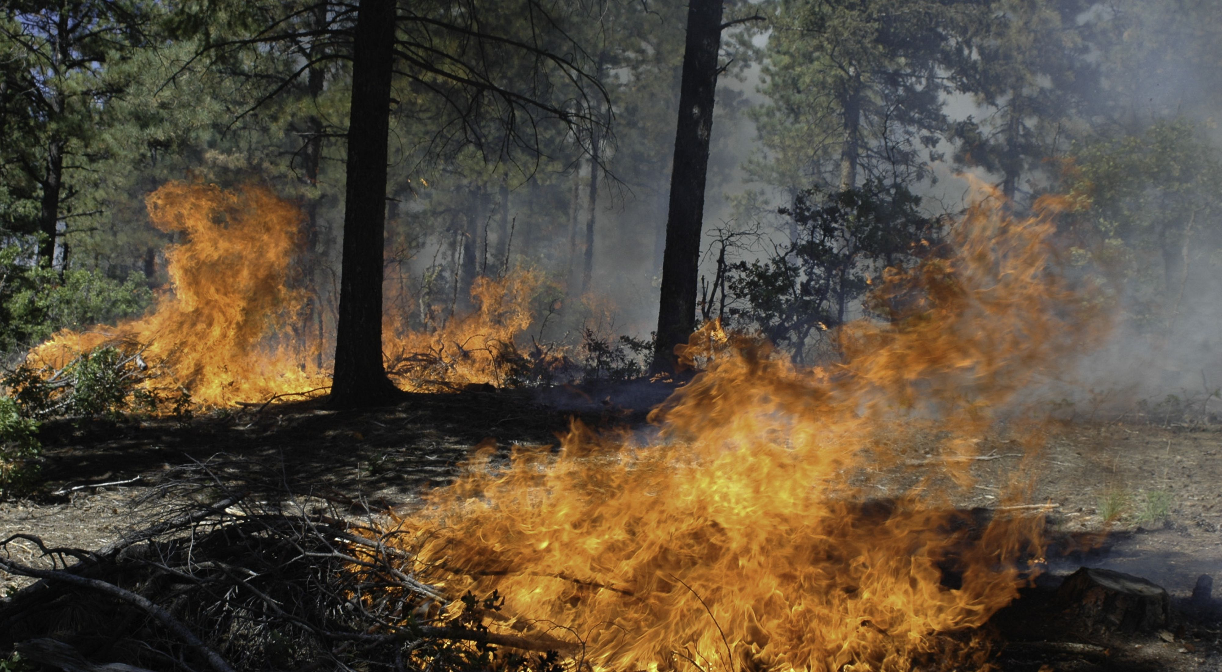 Controlled fire burns in forest.