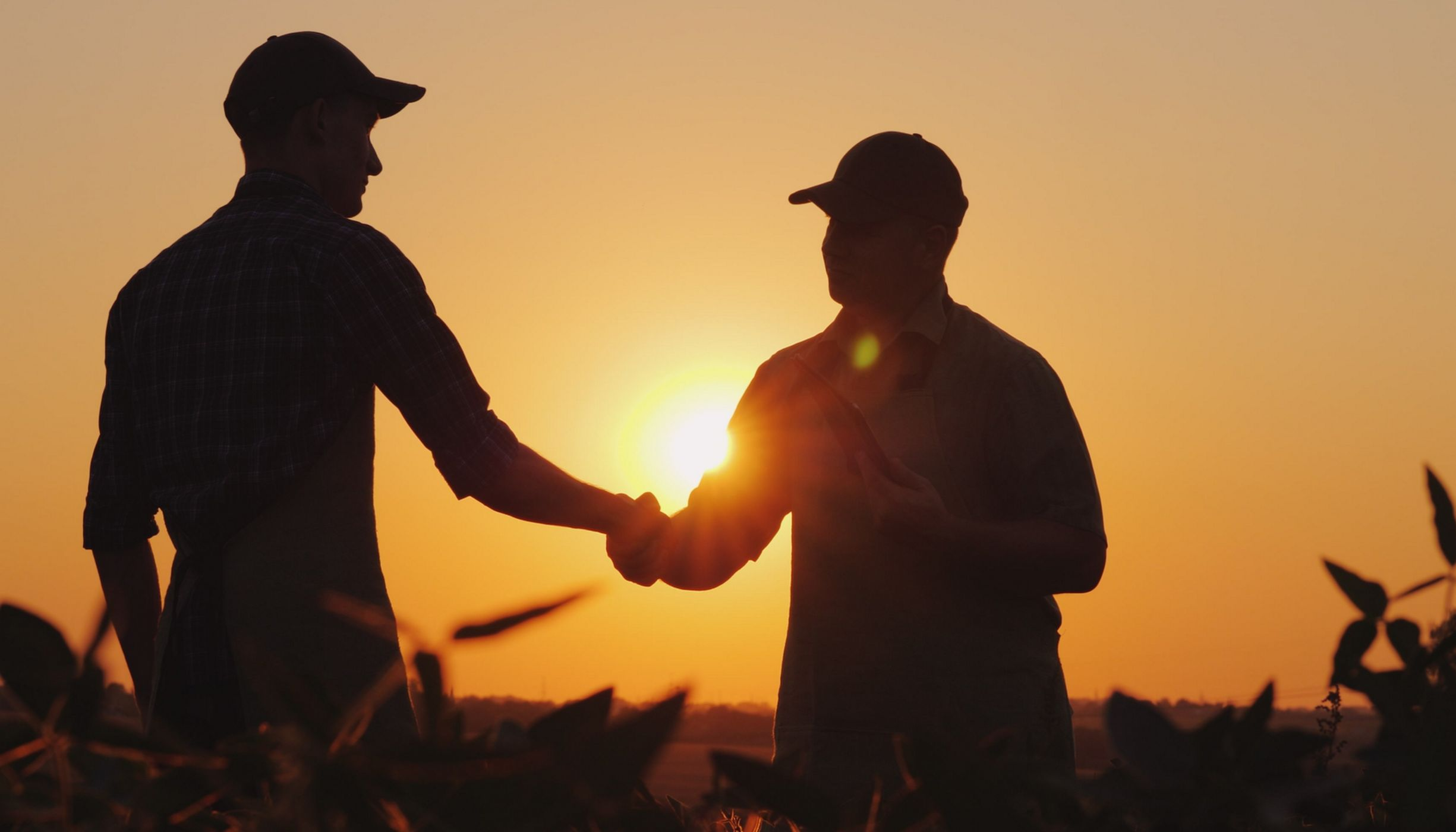 Farmers shaking hands in a field at sunset.
