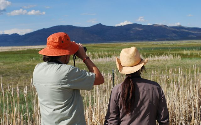 Two birdwatchers with binoculars look out over grassy wetlands.