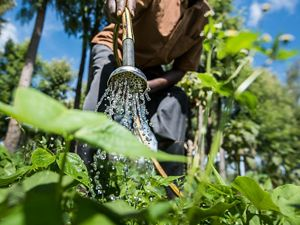 A hose is used to water plants on a farm in Africa.